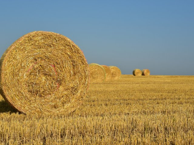 Buy a Bale Hay