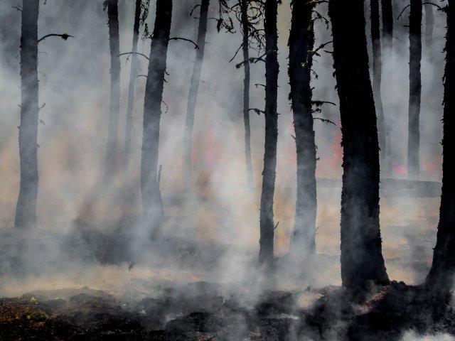 Bushfire Drought Crisis Appeal